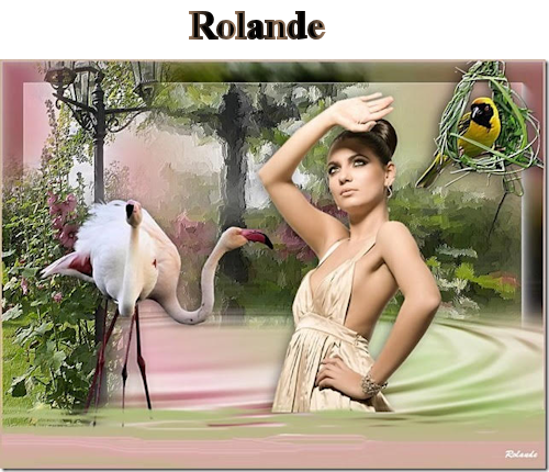 Flamingo rolande