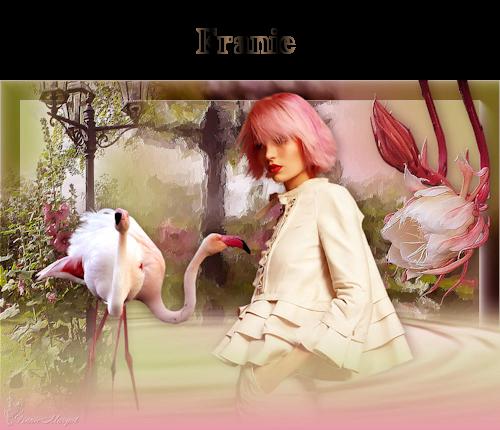 Flamingos franie