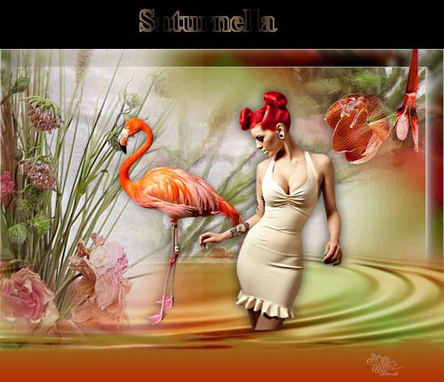 Flamingos saturnella